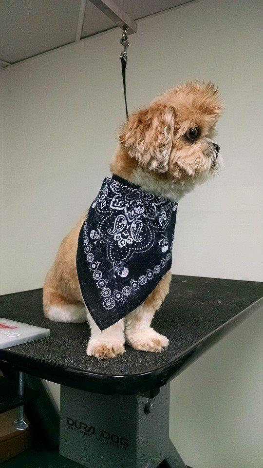 doggie-dolittle-doggie-15