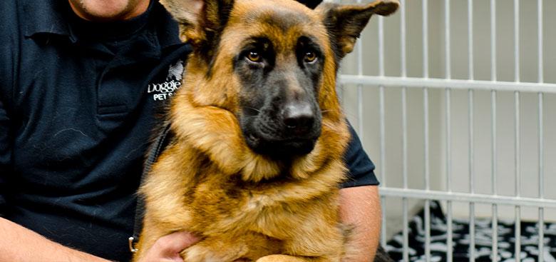 doggie-dolittle-seasoned-groomers
